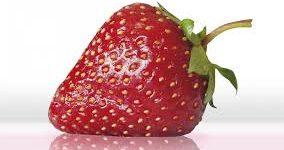 Cultivo de la fresa manual práctico