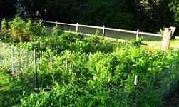 Jardinería cómo eliminar la mala hierba